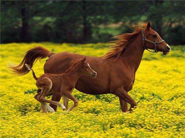 Профилактика для сустава лошадей видео реабелитация коленного сустава спортивный