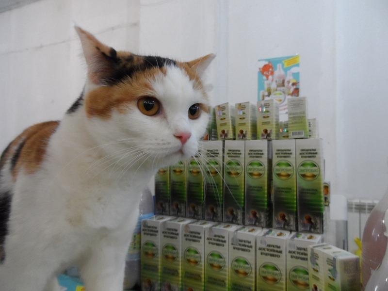 выставка кошек 2